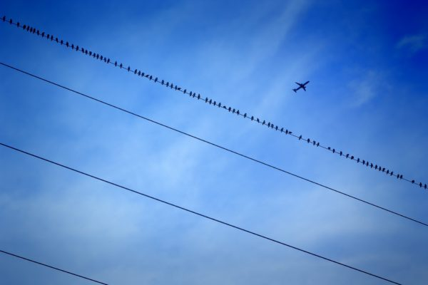 Birds and the plane